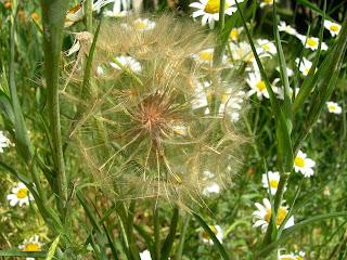 piante spontanee nella fattoria didattica dell ortica a Savigno Valsamoggia Bologna vicino a Zocca