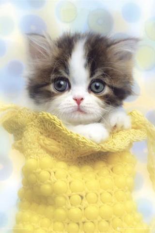 Cute Cats #3 | Cute Cats