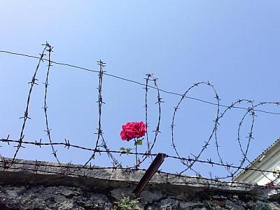 alambrada y flor