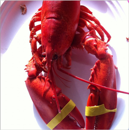 Steamed Maine Lobster Red