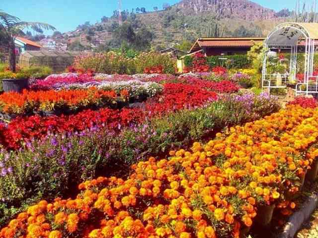 Indahnya Taman Begonia