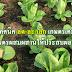 เทคนิค ลด-ละ-เลิก เกษตรเคมี ทำเกษตรผสมผสานให้ประสบผลสำเร็จ