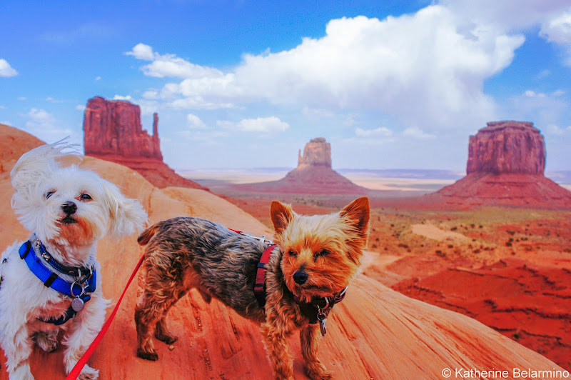 Henry and Charlie at Monument Valley Pet-Friendly Vacations Tips for Traveling with Dogs