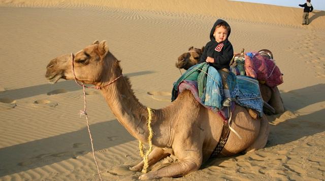 Camel Safari in Jaisalmer, Rajasthan