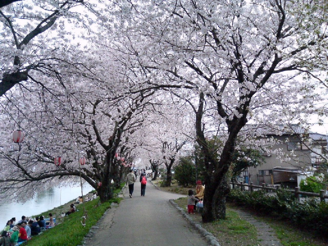 Vivencias De Una Otaku: Japón En Tonos Rosados Y Blancos