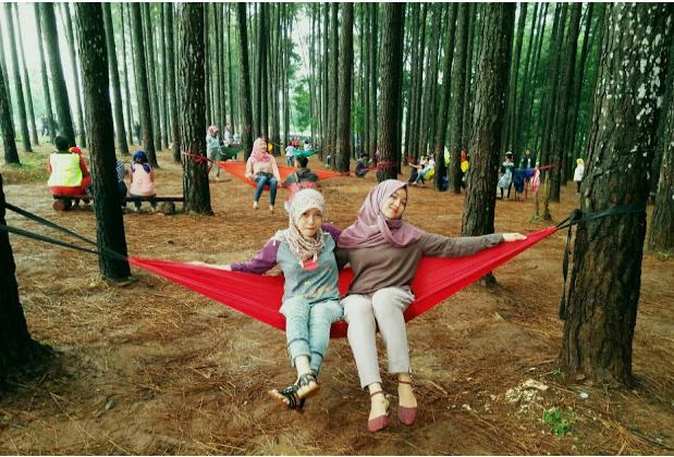 Eksotis Hutan Pinus Di Wana Wisata Pokland Cianjur