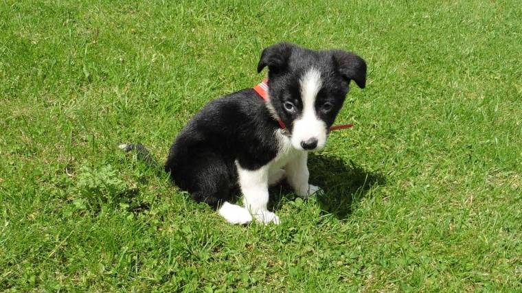 Mollie The Collie: Puppy Diaries