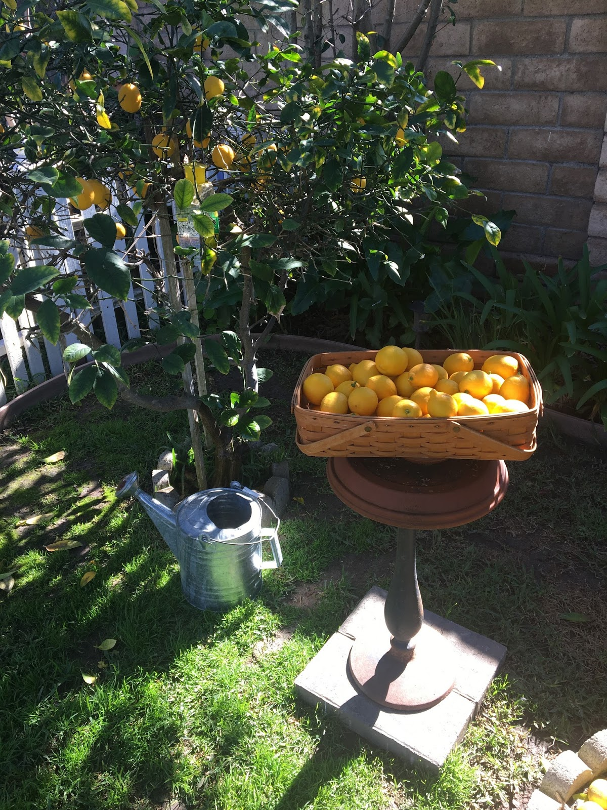 wild oak designs when life gives you lemons