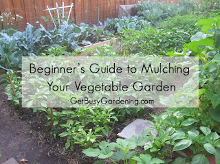 Best Mulch For Vegetable Garden