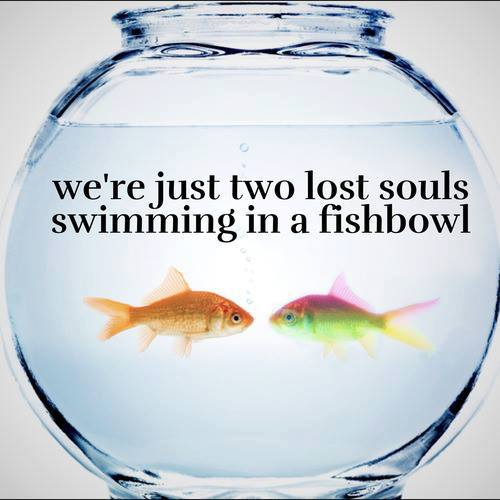 Two lost souls swimming in a fishbowl meaning