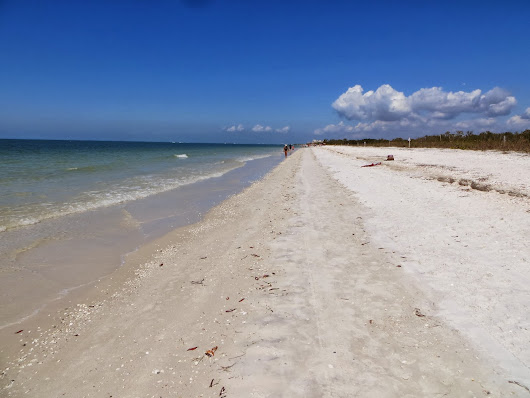 Beachcombing in Bonita Springs