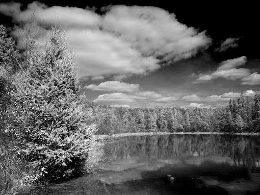 Burke Lake Black And White