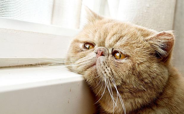 Berdosa Ke Mandulkan Kucing? Tak Larat Nak Jaga Banyak Sangat