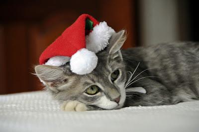 Imagenes de Gatitos de Navidad