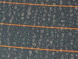 Cara Menghilangkan Jamur di Kaca Mobil