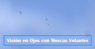 imagen de moscas volantes