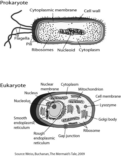choose two internal structures of prokaryotic cells and three from eukaryotic cells and describe the Prokaryotic and eukaryotic cells worksheet sci choose two internal structures of prokaryotic cells and three from eukaryotic cells and describe their function in.