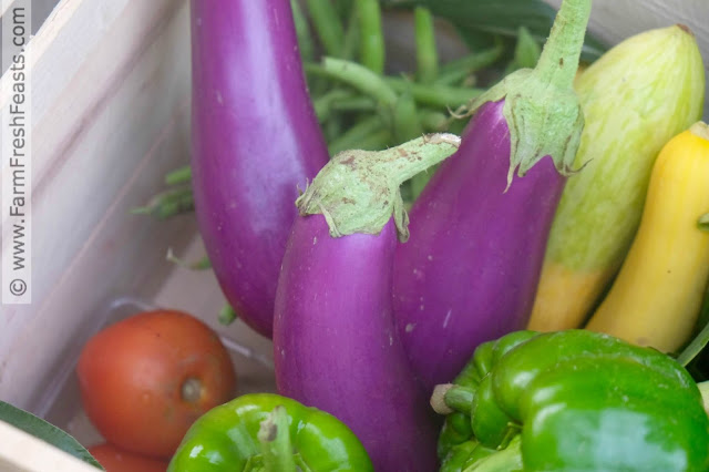 eggplants in the farm share box