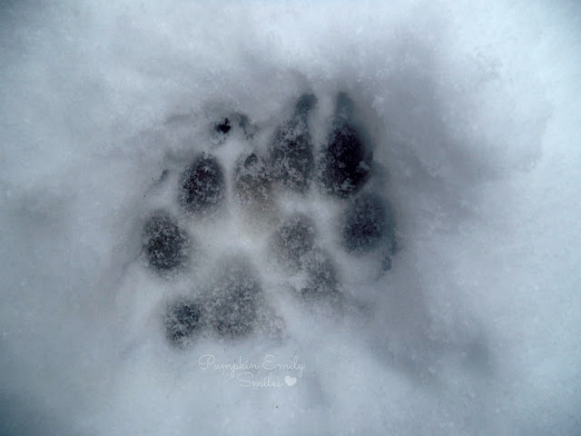 A dogs footprint in the snow