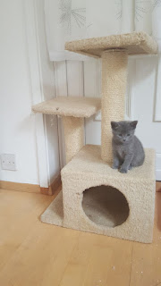Beautiful Russian kitten