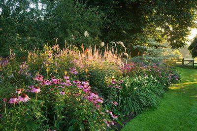 Echinacea, Echinops, Cornus controversa variegata en Petiffers Garden