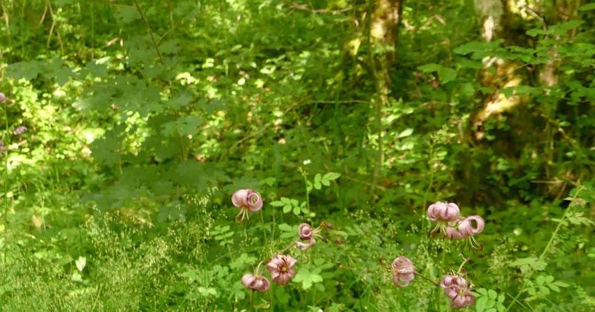 truffe et compagnie juin la saison des fleurs rares en bourgognes. Black Bedroom Furniture Sets. Home Design Ideas