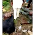 #Osundecides2018Watch video:Police on their way to Osun state involved in fatal accident, some of them killed