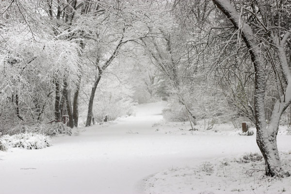 Winter, Moments, Stille, Wald, Wege