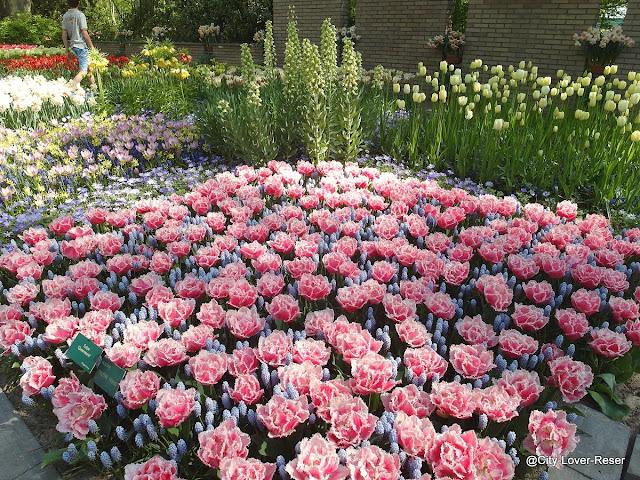 Keukenhof - trädgård nära Amsterdam