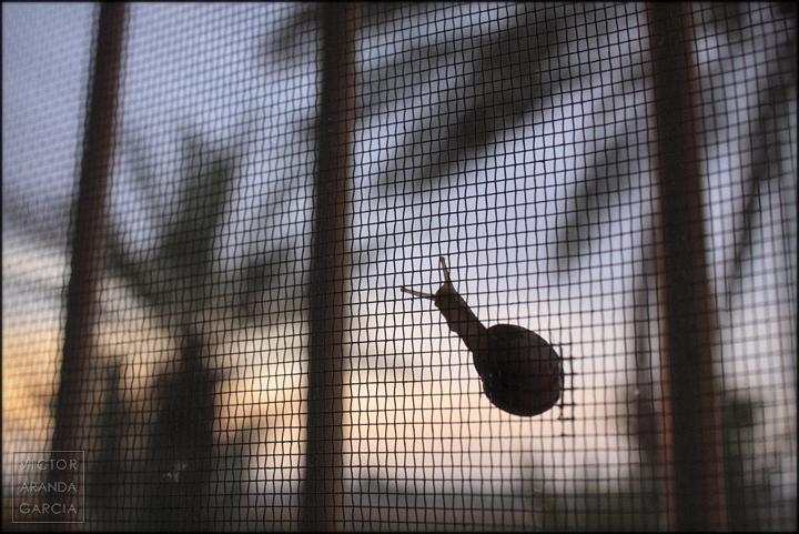 fotografía, Límites, serie, arte, caracol, mosquitera, amanecer, Fuente Álamo