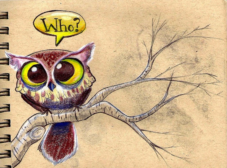 owl illustration all about owl