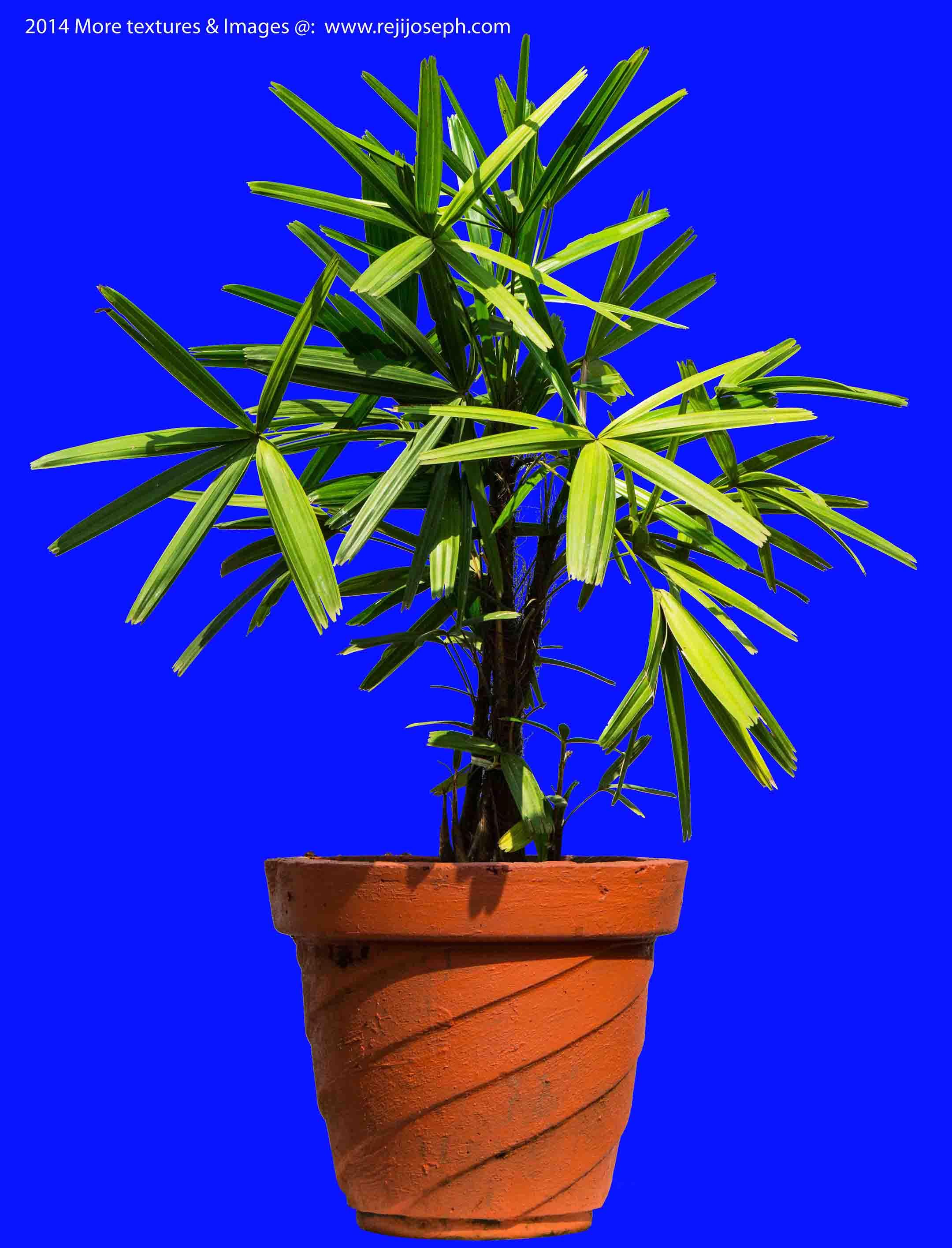 Ground Rattan Garden Plant Texture 00003