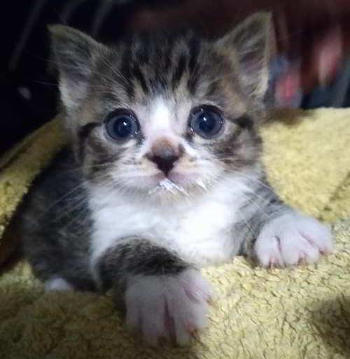gatitos 1