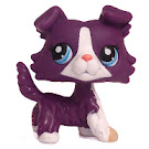 Littlest Pet Shop Special Collie (#1676) Pet