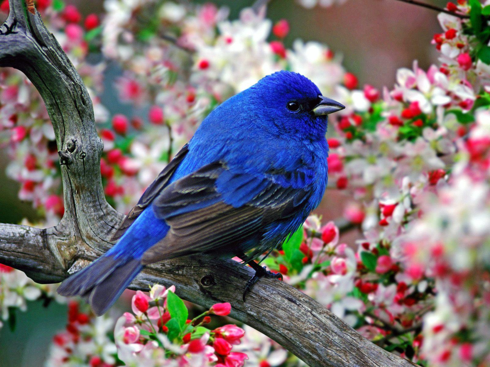 Bird Pictures Amazing Birds: Unique Wallpaper: Colourful Birds