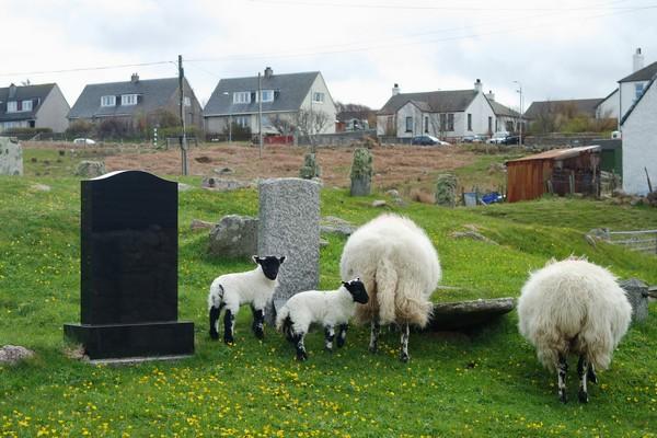écosse highlands île mull fionnphort