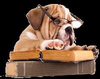 Cachorro lendo png
