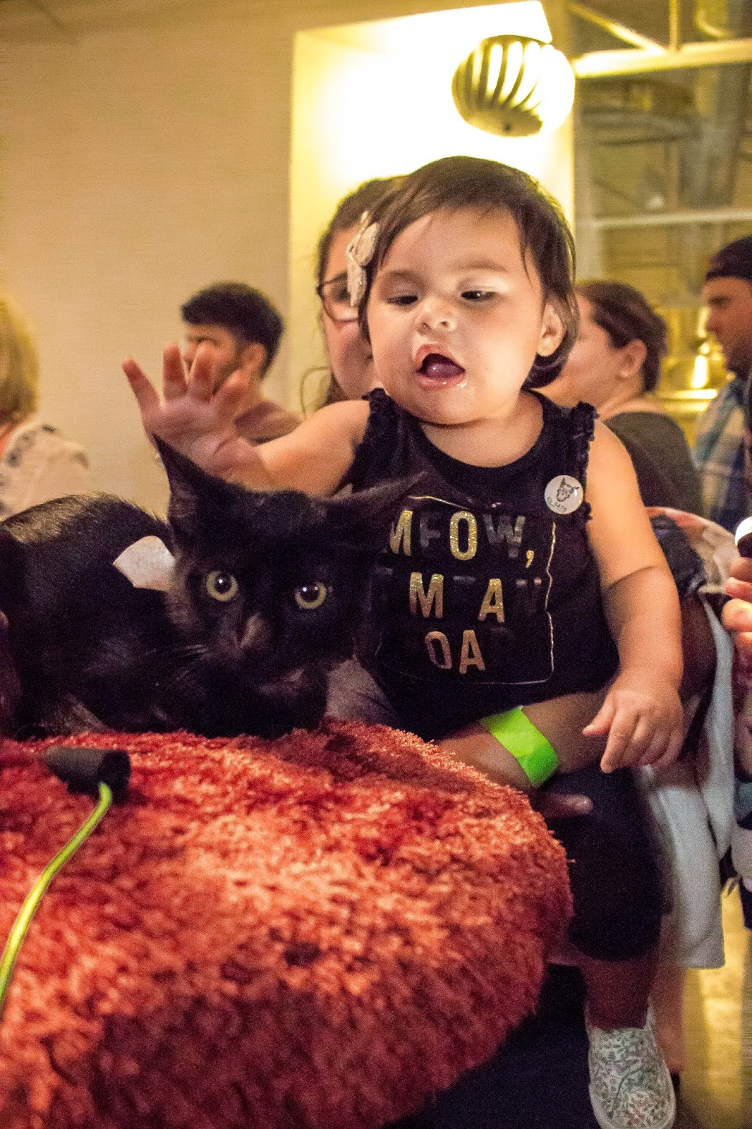 El Gato Cat Cafe pop up party