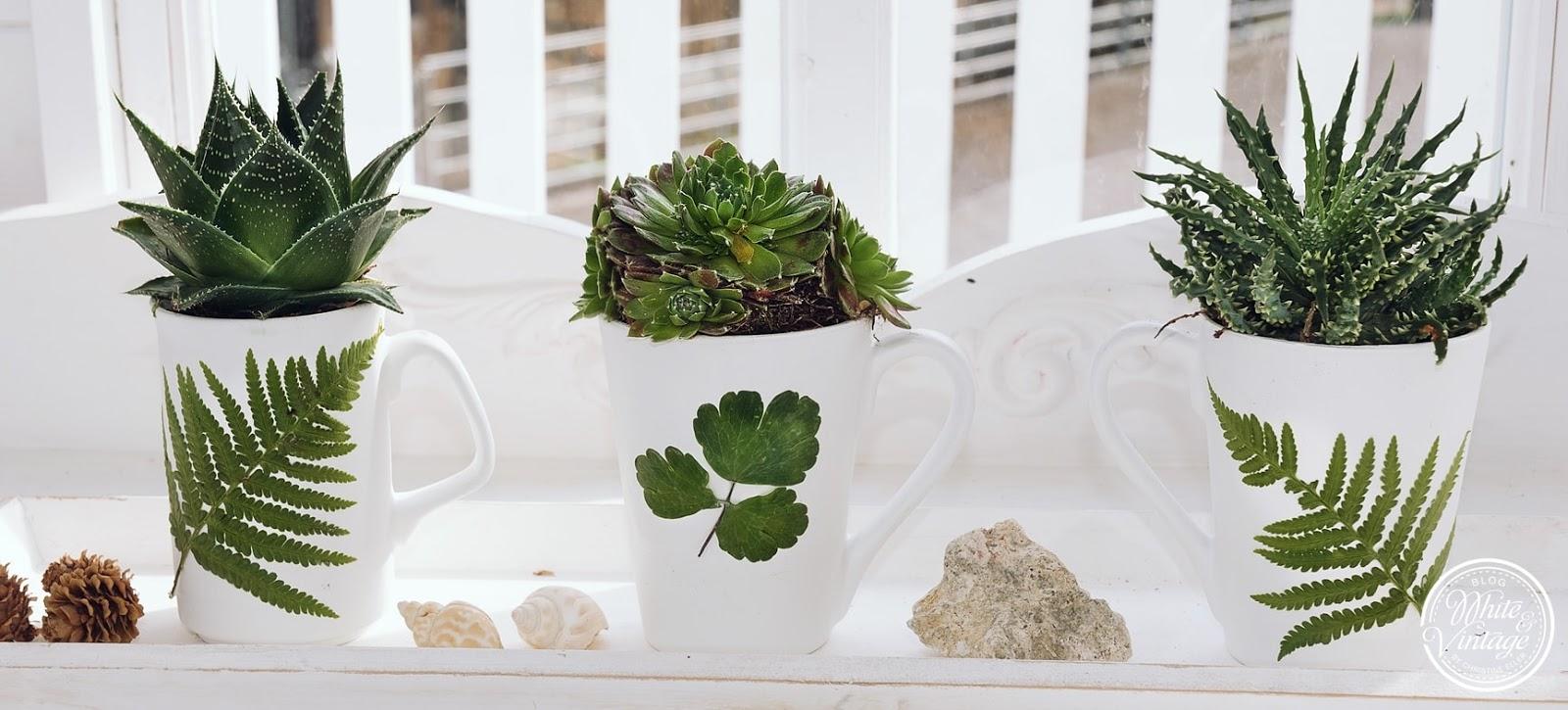Pflanzgefäße für Sukkulenten aus Tassen selber machen
