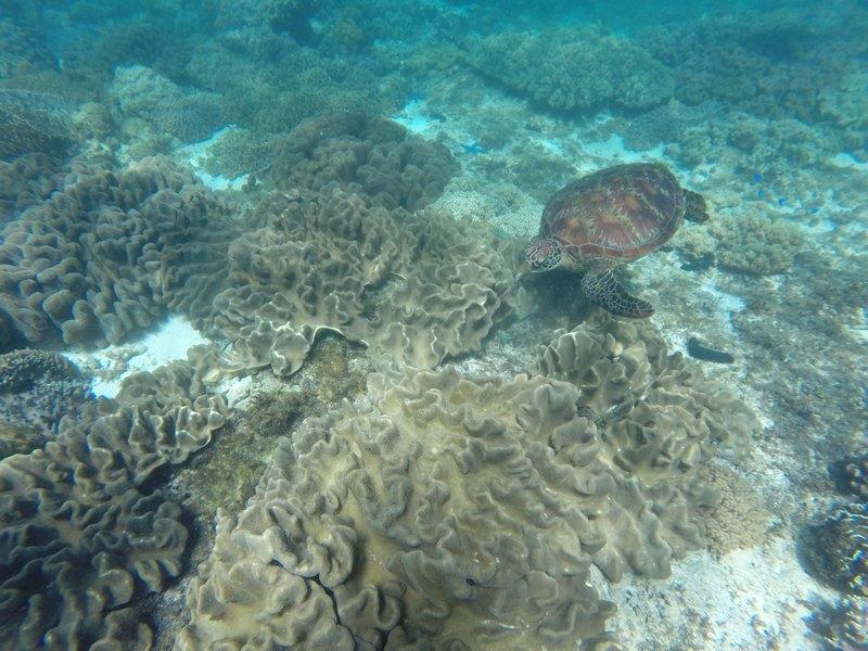 PHILIPPINES : Les tortues à Apo Island / 5 jours sur Siquijor & Apo Island / www.by-laura.fr