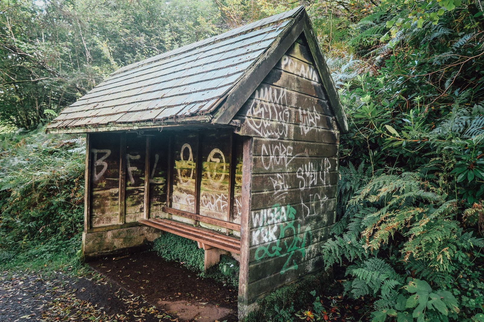 northern ireland dog walk shed graffiti liquid grain