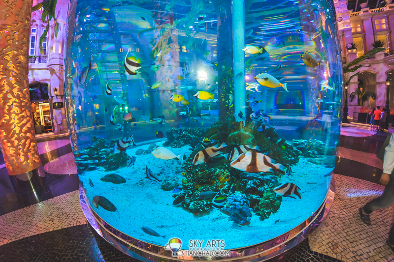 Check out the sea water fishes swimming in this huge tank at MGM Macau