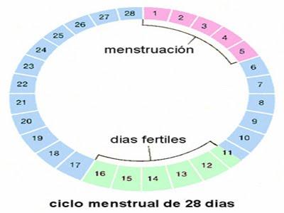 Para saber si estoy embarazada cuanto tiempo tengo que esperar