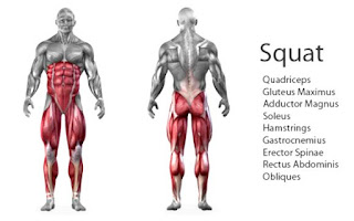 Squat muscle targeted