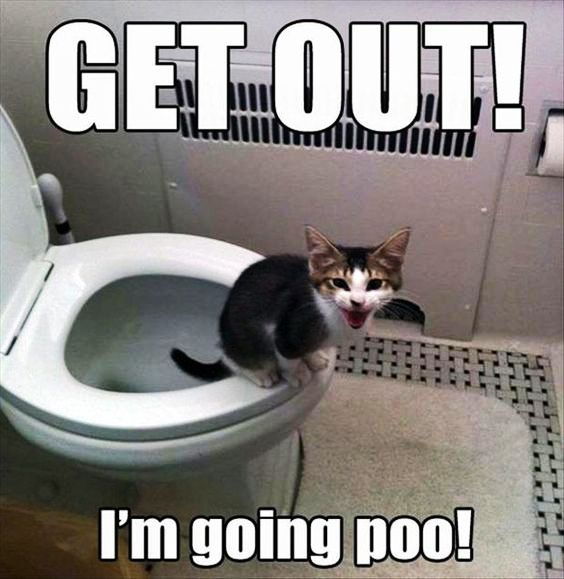 Funny cat pictures gallery, okay google funny cat pictures, search funny cat pictures, funny cat pictures to share on facebook, funniest cat images ever