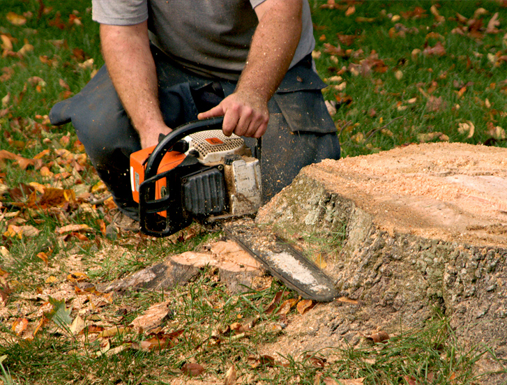hire-for-Tree-stump-Removal