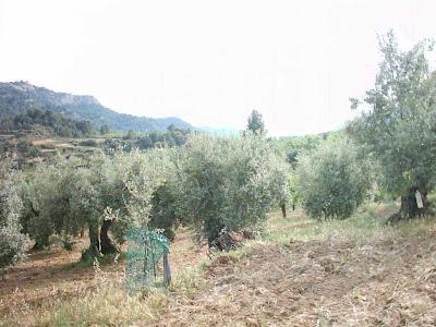 La pileta, camino, pantano de Pena, embalse, finca, almendros, olivos 15
