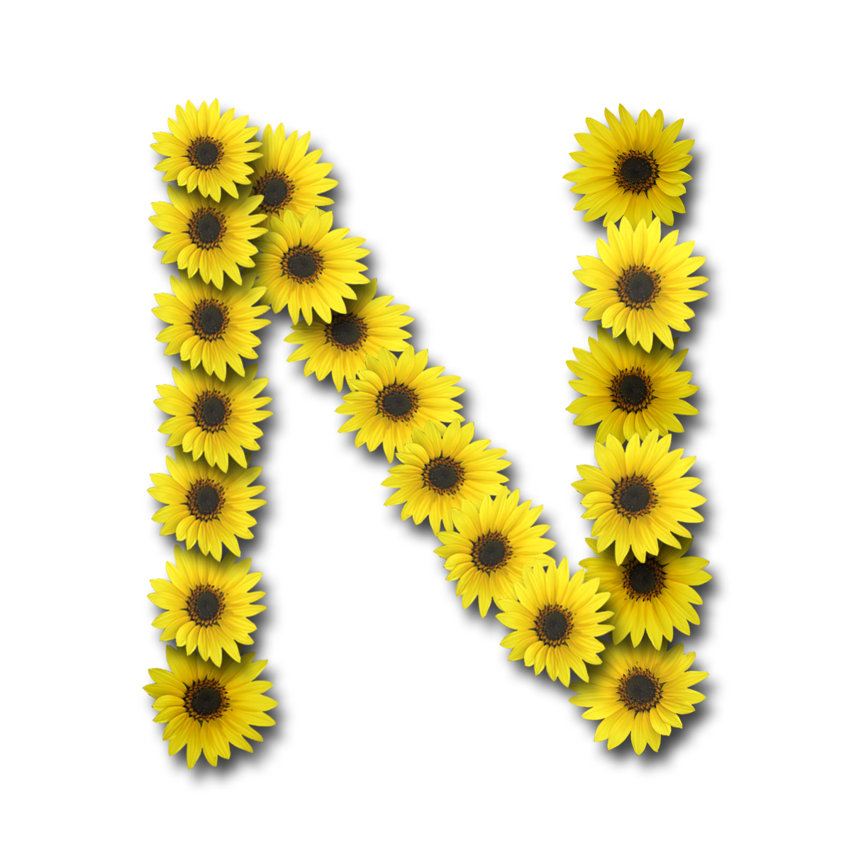Capital-Letter-N1-Sunflower Varsity Letter N Template on final four template, professional letter template, pro letter template, alumni letter template, letter f template, college letter template, mission letter template, letter v template, white letter template, sophomore letter template, middle school letter template, open letter template, impact letter template, football letter template, varsity letters alphabet, national letter of intent template, black letter template, team letter template, blue letter template, block letters template,