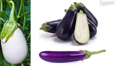 বেগুন, Eggplant, Eggplant vegetable; aubergine; bringal; الباذنجان; 茄子; Aubergine; बैंगन; Terong; Melanzana; ナス; बैंगन; Berinjela; Баклажан; Berenjena; Patlıcan; بینگن; بادمجان