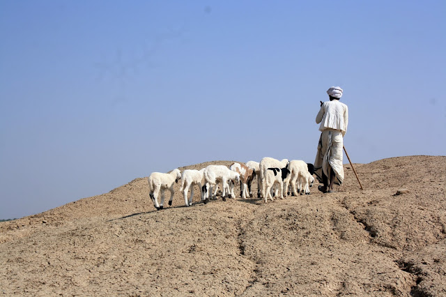 Nomad, shepherd, sheep, random, gujarat, kutch, bhuj